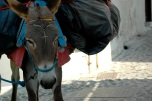 #Santorini #Greece # Donkey