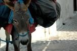 #Santorini #Greece # Donkey
